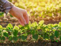 Augu aizsardzības līdzekļi